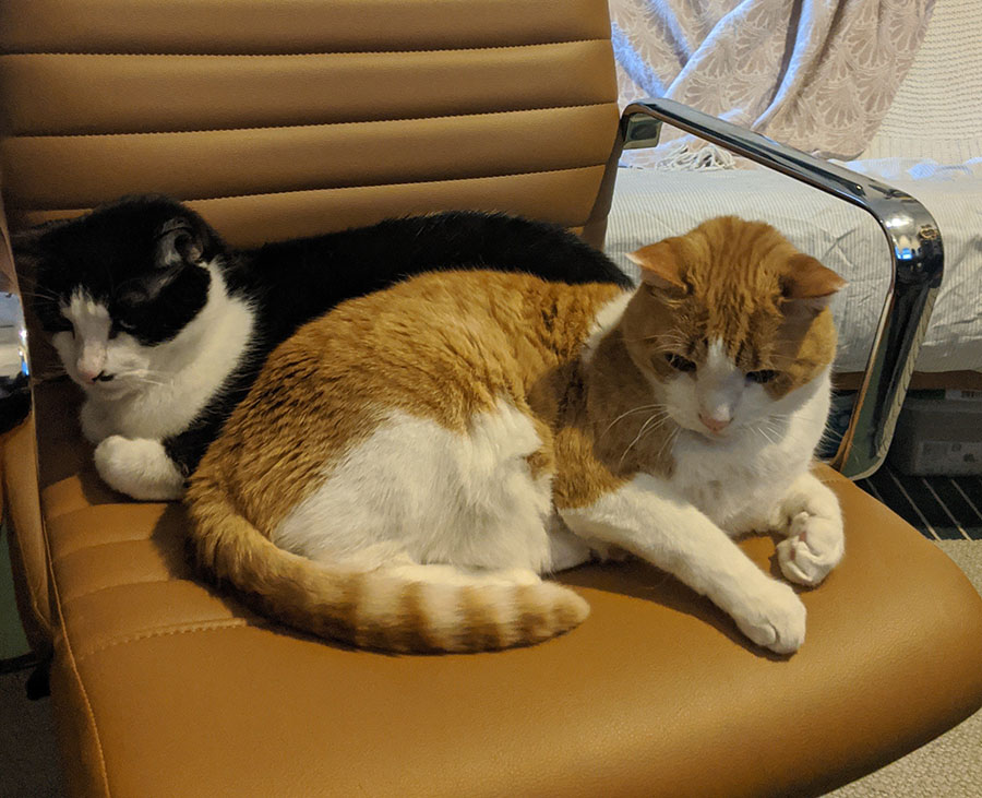 Marshall & PB in my new desk chair